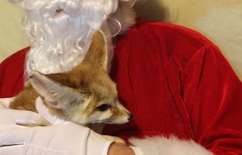 Santa & Wiley