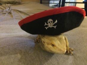 Pirate Dale