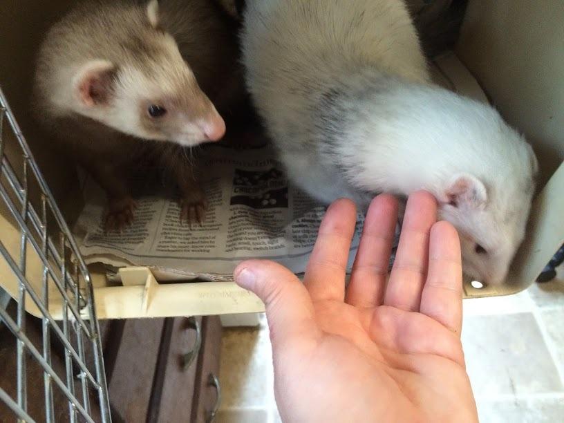 Penelope & Felix