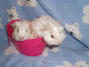 Fluffy and Snowball say thank you!