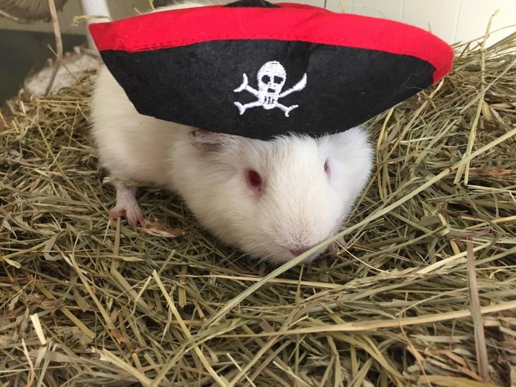 Pirate Casper