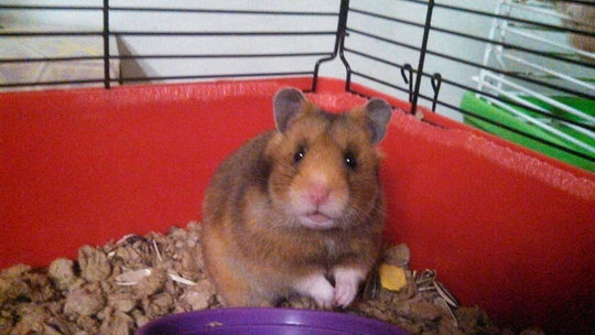One of the 14 new hamsters