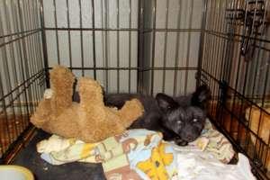 Vixen and her teddy bear