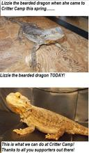 Lizzie Before & After
