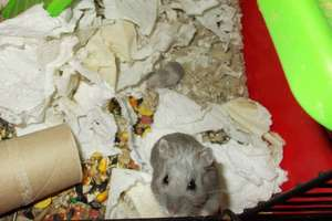 Momma hamster & her baby