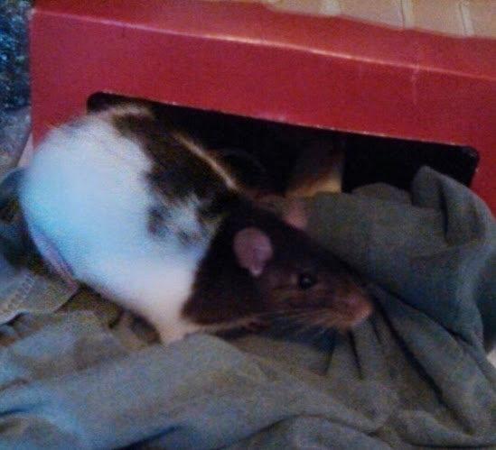 Momma Ratty