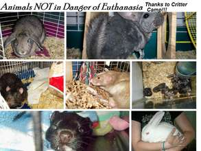 Animals NOT euthanized because of Critter Camp