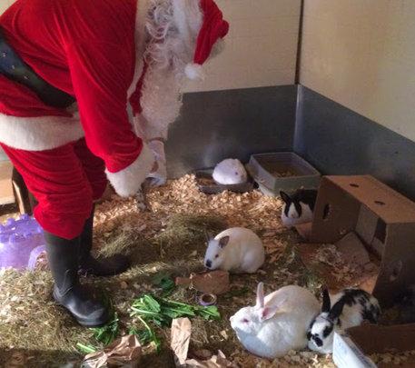 Santa with the bunnies!