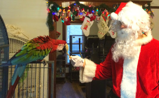 Santa with Jackson the parrot