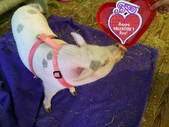 Pearl the piggy
