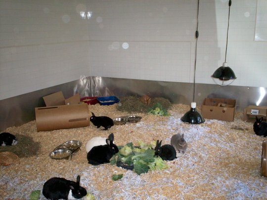 Critter Camp's Free Range Bunny haven