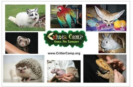 Critter Camp Exotic Pet Sanctuary Rescues MorePets