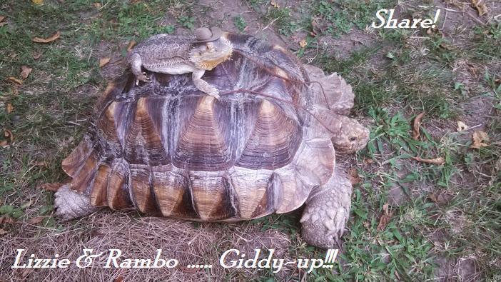Giddyup Lizzie & Rambo!