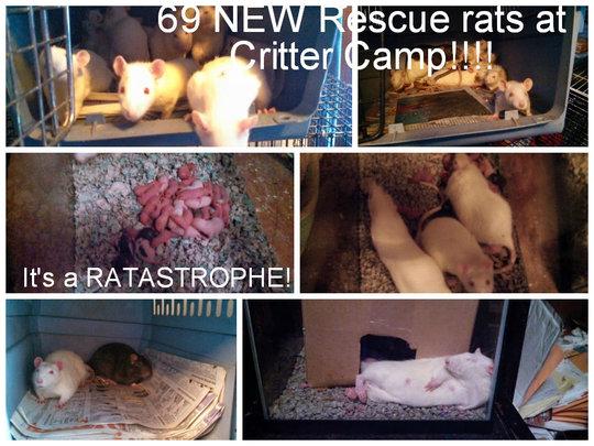 Ratastrophe!