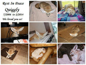 Rest in Peace Quiggly