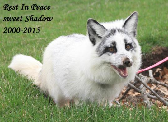 RIP Shadow