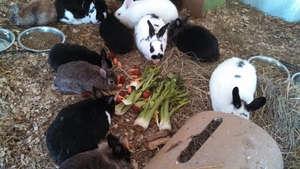 Bunny Easter Feast