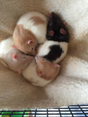 more of the new ratties
