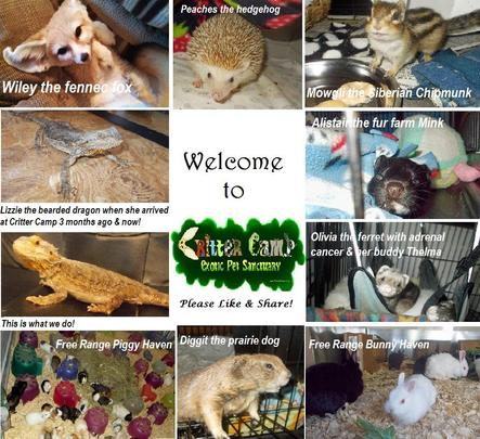 Welcome to Critter Camp!