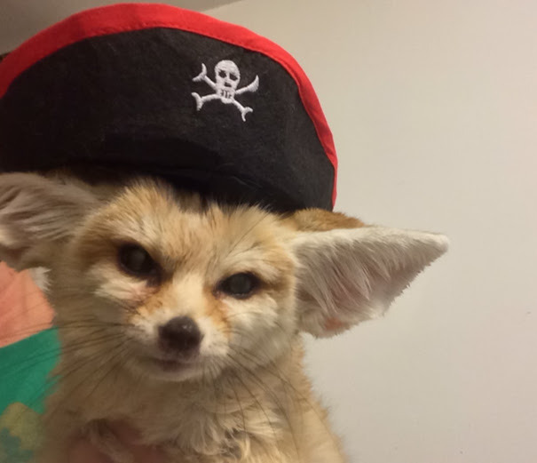 Pirate wiley