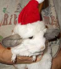 Feivel the chinchilla says Happy holidays!