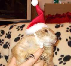 Diggit the prairie dog says Happy Holidays!