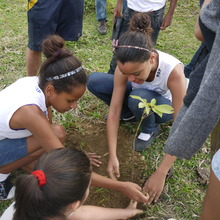 planting a tree to restore soil and forests