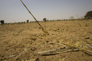 Land is dry and cracked, causing harvests to fail