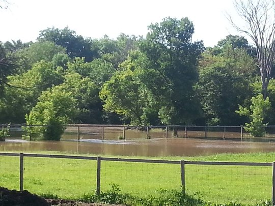 Flooded Pasture Again!