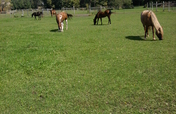 Rejuvenate Pastures for Rescue Horses to Graze