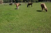 Rejuvenate Pastures for Rescue Horses to Graze