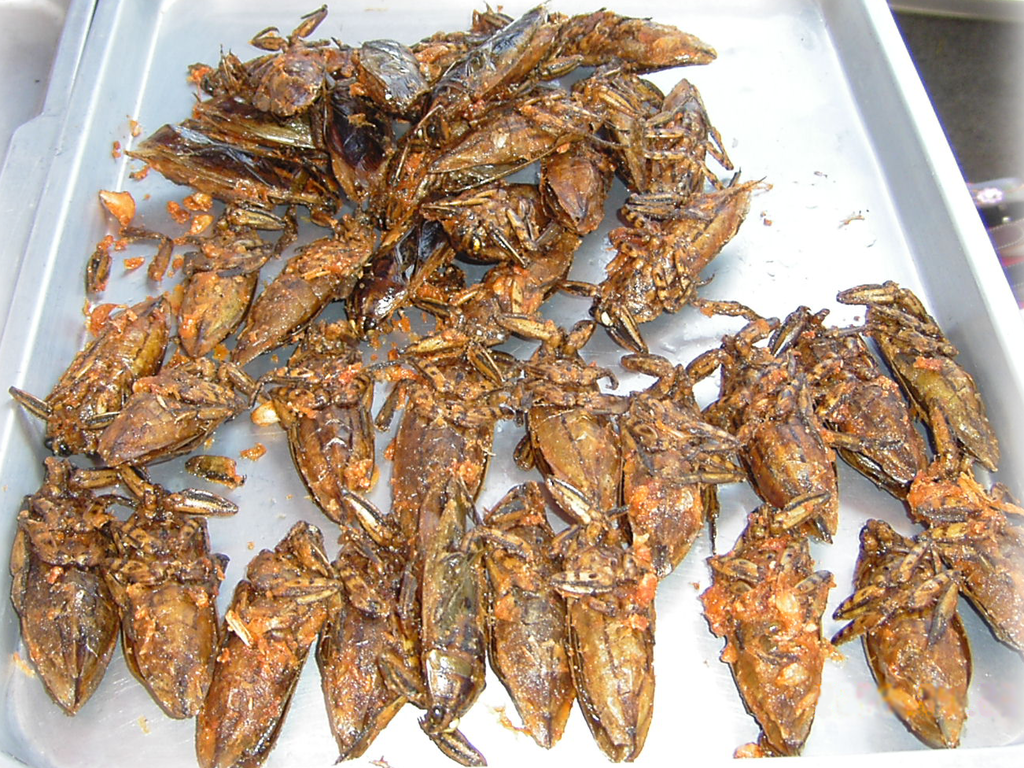 Fried Water Bug Snacks in Thailand