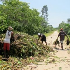 Team collects water hyacinth to fertilize land
