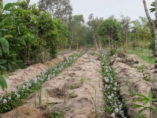 Habitat improvement continues