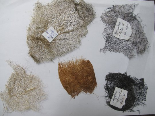 Cocoon samples from each dye