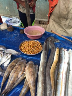 Insects sold in market along with fish and eel