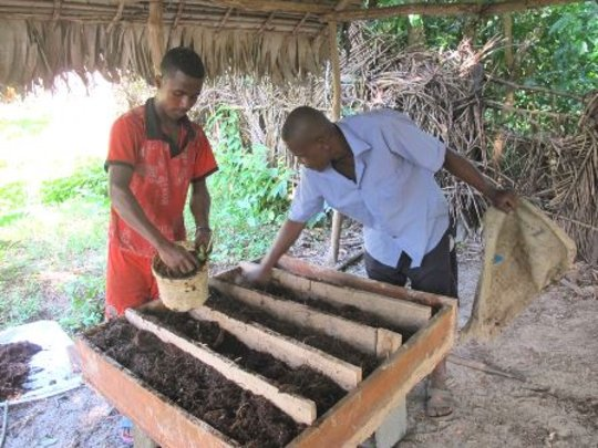 SEPALI staff demonstrates beetle rearing beds