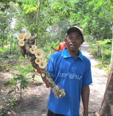 Mushroom production at SEPALI demonstration site