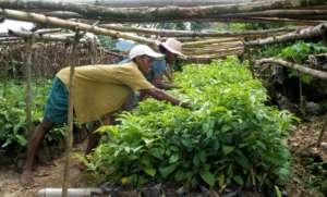 Planting Silkworm Host Trees
