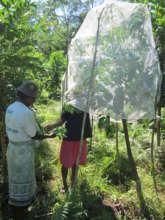 Rearing Silkworms