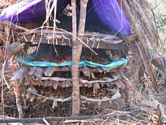 Protecting pupae until adult emergence