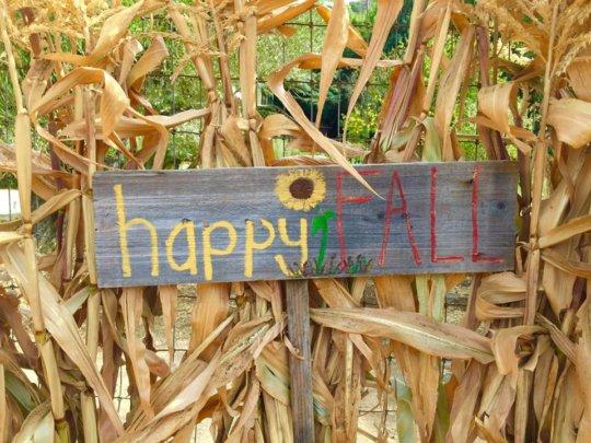 Happy Fall from Hidden Villa!