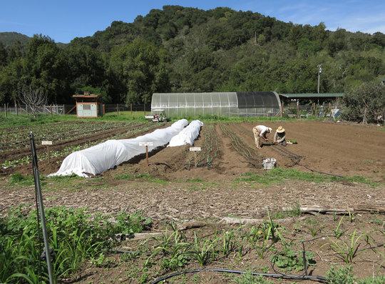 Farm Crew in the Fields
