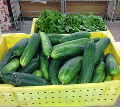Fresh cucumbers and basil