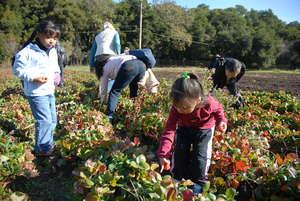 Families Harvesting Vegetables