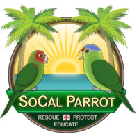 REP for Wildlife; SoCal Parrot