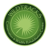 Wildtracks