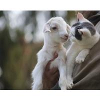 Jill Phipps associazione etica antispecista