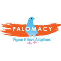 Palomacy Pigeon & Dove Adoptions (formerly MickaCoo)