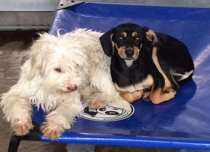 Image for Give Shelter Pups a Pet Bed & Toy